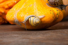 Snails and Pumpkins Stock Image