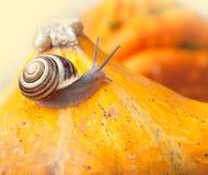 Snails and Pumpkins Stock Photos