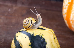 Snails and Pumpkins Stock Photography