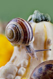Snails and Pumpkins Royalty Free Stock Photography
