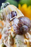 Snails and Pumpkins Royalty Free Stock Images