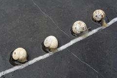 Snails race Stock Images