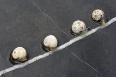 Snails race. Imaginary snails race, over wet marble Stock Images