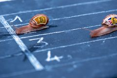 Snails race currency metaphor about Bitcoin against Pound sterling. Concept Snails race currency metaphor about Bitcoin against Pound sterling Royalty Free Stock Photos