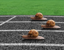 Snails race on sports track. Near the finish line Royalty Free Stock Photos