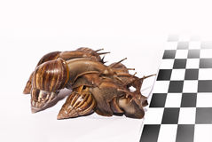 Snails racing Royalty Free Stock Images