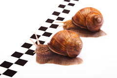 Snails racing Stock Photos