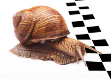 Snails racing Stock Photography