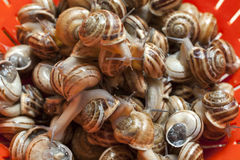 Snails Stock Photography