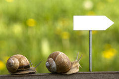 Snails on the road Royalty Free Stock Images