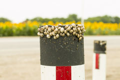 Snails. Stock Images