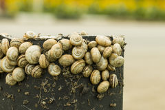 Snails. Stock Photo