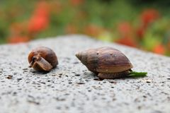 Snails on a rock stock images
