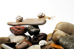 Snails on rocks Stock Photo