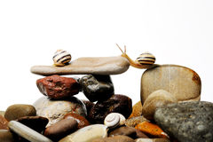Snails on rocks. Three  garden snails on colorful stones on white Stock Image