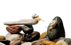 Snails on rocks. Two garden snails on colorful stones on white Stock Image