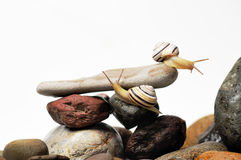 Snails on rocks. Two garden snails on colorful stones on white Stock Photos