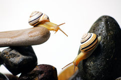 Snails on rocks. Two garden snails on colorful stones on white Royalty Free Stock Images