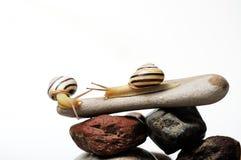 Snails on rocks Royalty Free Stock Photos