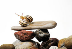 Snails on rocks. Two garden snails and fly  on colorful stones on white Royalty Free Stock Image