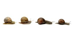 Snails in a Row royalty free stock photography