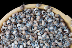 Snails for sale Stock Photo