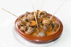 Snails in sauce Royalty Free Stock Image