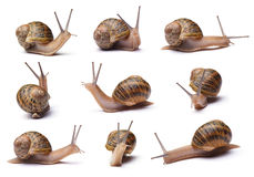 Snails. Set of snails  on white background Royalty Free Stock Image
