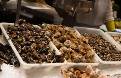 Snails and shell seafood on ice at la Boqueria market in Barcelona Stock Photos