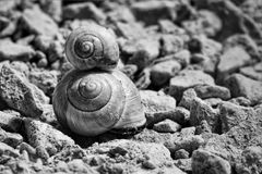 Snails, Shell, Snail Shells Stock Photo