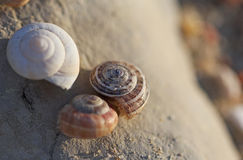 The snails shells laying on the stones macro shot Stock Images