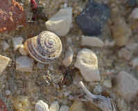 The snails shells laying on the stones macro shot Royalty Free Stock Photography
