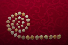 Snails shells. Puzzle from snails shells formated into sign Royalty Free Stock Images
