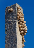 Snails sit on a column Stock Images