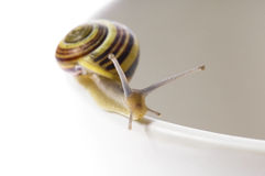 Snails. slow love Royalty Free Stock Photo