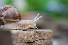 Snails. Snail crawling on a sandstone Stock Images