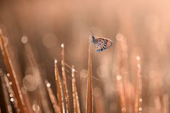 Butterfly, animals, macro, bokeh, insect, nature, stock images