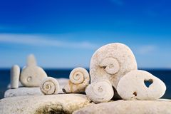 Snails from a stone. Sea stones shined with the sun on a beach Royalty Free Stock Image