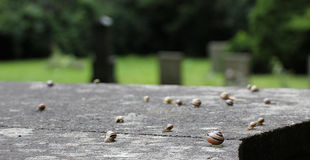 Snails On Stone Royalty Free Stock Photography
