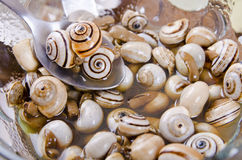 Snails texture. Royalty Free Stock Photos