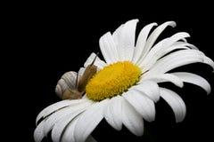 snails två Arkivfoto