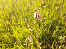 Snails. Two snails on the field Stock Image