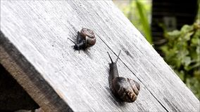 Snails stock video footage