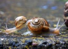 Snails. Two little snail on concrete Stock Image