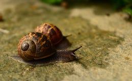 Snails Stock Photo