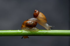 Snails are walking cross Royalty Free Stock Photography