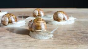 Snails walking stock footage