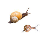 Snails on a white background Stock Image
