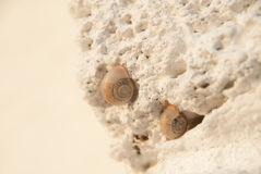 Snails on the white stone. Two snails on the white stone Royalty Free Stock Photography