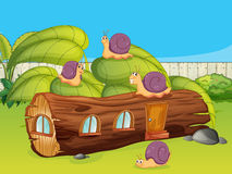 Snails and a wood house Royalty Free Stock Photos